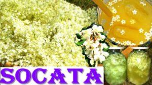 SOCATA - flori de soc și salcâm, cu miere